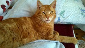 Kater-Garfield